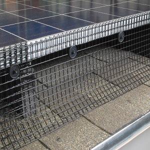 birds under solar panels